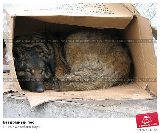 Бездомный пес, фото № 21185, снято 2 апреля 2006 г. (c) Fro / Фотобанк Лори