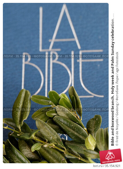 Bible and boxwood branch. Holy week and Palm Sunday celebration. ... Стоковое фото, фотограф Fred de Noyelle / Godong / age Fotostock / Фотобанк Лори