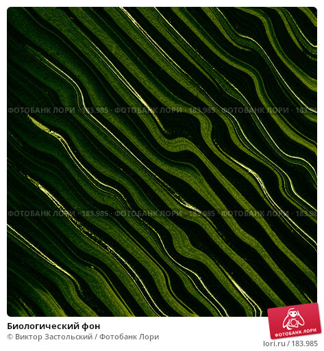 Биологический фон, иллюстрация № 183985 (c) Виктор Застольский / Фотобанк Лори