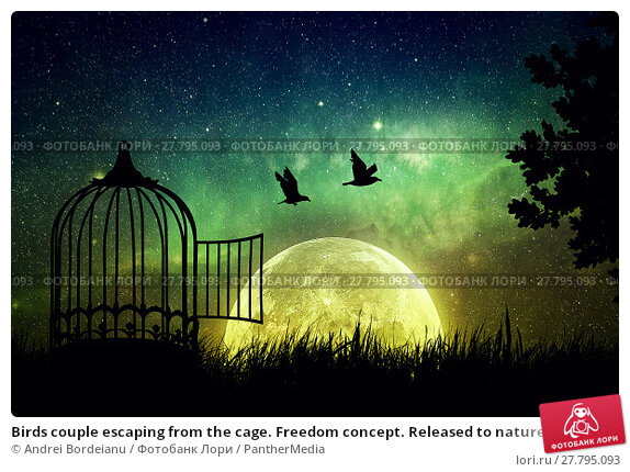 Купить «Birds couple escaping from the cage. Freedom concept. Released to nature. Beautifu and positivel screen saver with a starry sky and a full moon», фото № 27795093, снято 18 февраля 2018 г. (c) PantherMedia / Фотобанк Лори