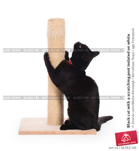 Black cat with a scratching post isolated on white. Стоковое фото, фотограф Zoonar.com/Micha Klootwijk / age Fotostock / Фотобанк Лори