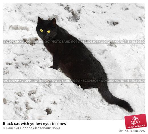 Купить «Black cat with yellow eyes in snow», фото № 30306997, снято 14 марта 2019 г. (c) Валерия Попова / Фотобанк Лори
