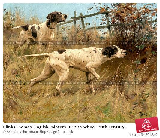 Blinks Thomas - English Pointers - British School - 19th Century. Стоковое фото, фотограф Artepics / age Fotostock / Фотобанк Лори
