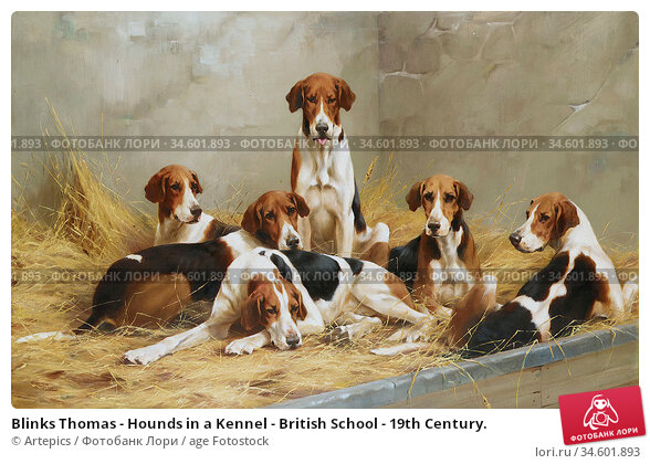 Blinks Thomas - Hounds in a Kennel - British School - 19th Century. Стоковое фото, фотограф Artepics / age Fotostock / Фотобанк Лори
