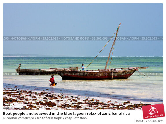 Boat people and seaweed in the blue lagoon relax of zanzibar africa. Стоковое фото, фотограф Zoonar.com/lkpro / easy Fotostock / Фотобанк Лори