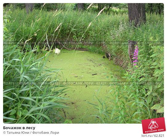 Бочажок в лесу, эксклюзивное фото № 62821, снято 10 июля 2007 г. (c) Татьяна Юни / Фотобанк Лори