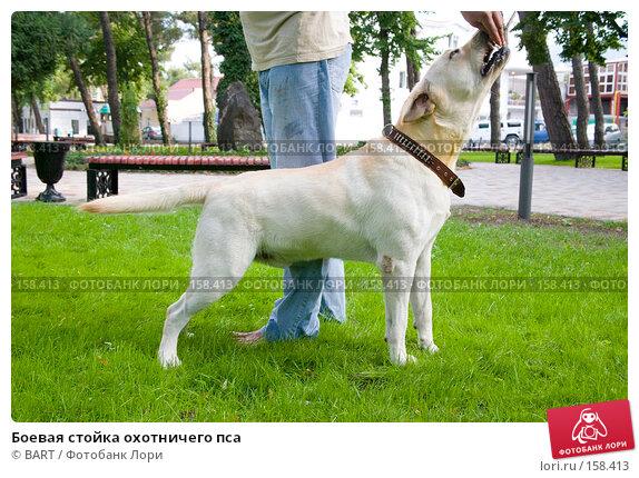 Боевая стойка охотничего пса, фото № 158413, снято 12 июня 2007 г. (c) BART / Фотобанк Лори