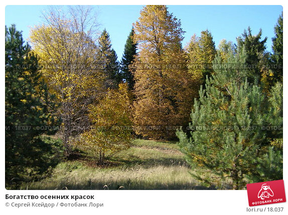 Купить «Богатство осенних красок», фото № 18037, снято 26 сентября 2006 г. (c) Сергей Ксейдор / Фотобанк Лори