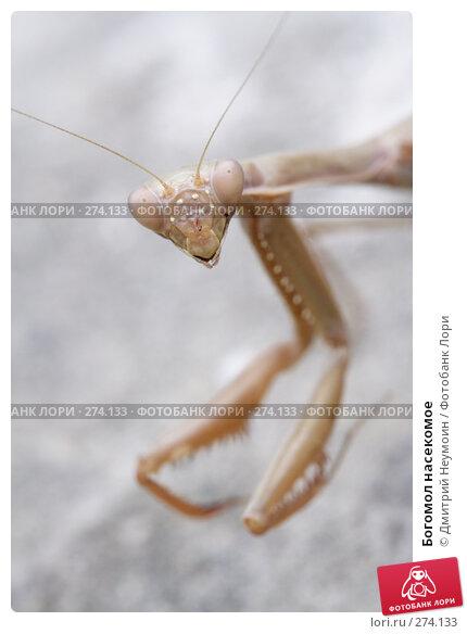 Богомол насекомое, эксклюзивное фото № 274133, снято 28 сентября 2006 г. (c) Дмитрий Неумоин / Фотобанк Лори