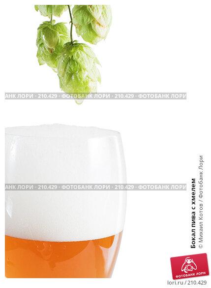 Бокал пива с хмелем, фото № 210429, снято 1 сентября 2007 г. (c) Михаил Котов / Фотобанк Лори
