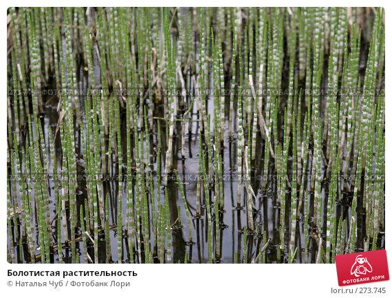 Болотистая растительность, фото № 273745, снято 1 мая 2008 г. (c) Наталья Чуб / Фотобанк Лори