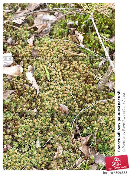 Купить «Болотный мох ранней весной», фото № 309533, снято 10 мая 2008 г. (c) Parmenov Pavel / Фотобанк Лори