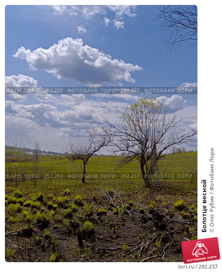 Болотце весной, фото № 292237, снято 15 мая 2008 г. (c) Олег Рубик / Фотобанк Лори