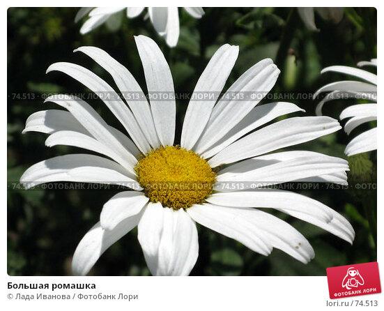 Большая ромашка, фото № 74513, снято 23 июля 2007 г. (c) Лада Иванова / Фотобанк Лори