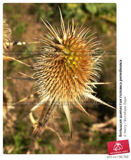 Большая шипастая головка репейника, фото № 96709, снято 24 августа 2007 г. (c) Harry / Фотобанк Лори