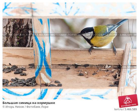 Купить «Большая синица на кормушке», эксклюзивное фото № 3466589, снято 13 марта 2012 г. (c) Игорь Низов / Фотобанк Лори