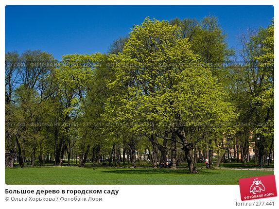 Большое дерево в городском саду, фото № 277441, снято 4 мая 2008 г. (c) Ольга Хорькова / Фотобанк Лори