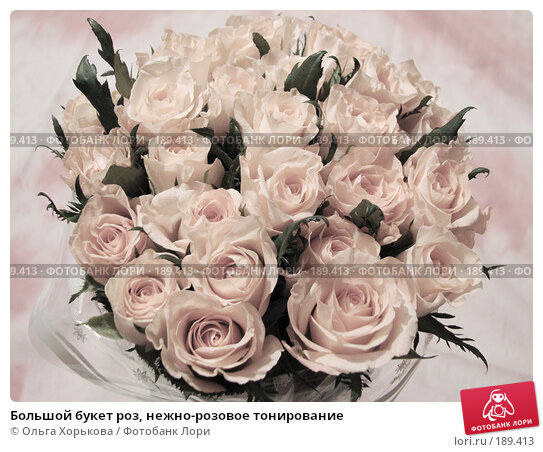 Купить «Большой букет роз, нежно-розовое тонирование», фото № 189413, снято 6 декабря 2007 г. (c) Ольга Хорькова / Фотобанк Лори