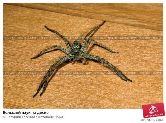 Большой паук на доске, фото № 177861, снято 24 мая 2017 г. (c) Парушин Евгений / Фотобанк Лори