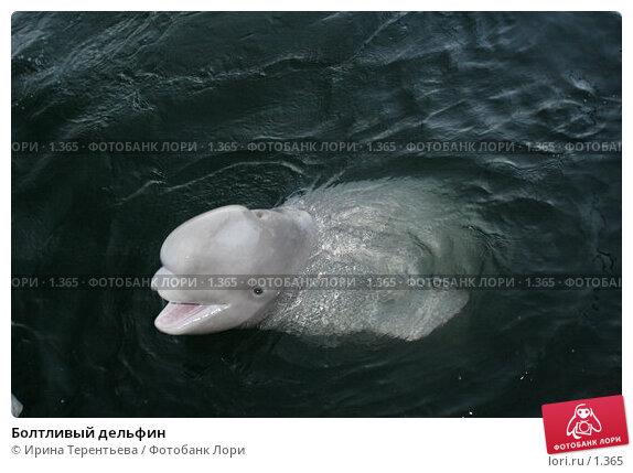 Болтливый дельфин, эксклюзивное фото № 1365, снято 15 сентября 2005 г. (c) Ирина Терентьева / Фотобанк Лори