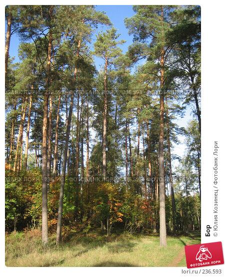 Купить «Бор», фото № 236593, снято 23 сентября 2007 г. (c) Юлия Козинец / Фотобанк Лори