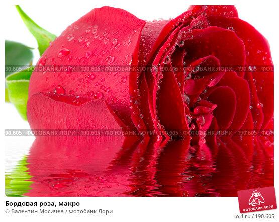 Бордовая роза, макро, фото № 190605, снято 16 февраля 2007 г. (c) Валентин Мосичев / Фотобанк Лори