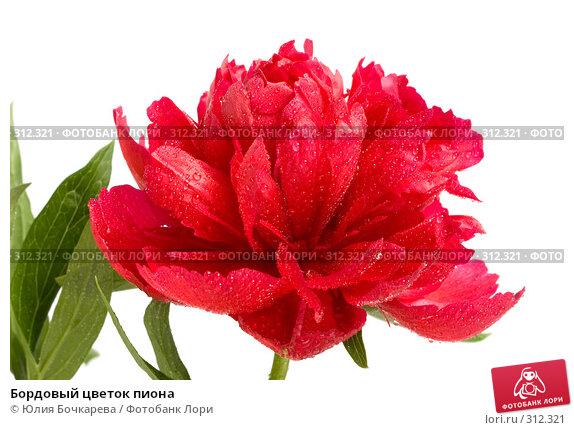 Бордовый цветок пиона, фото № 312321, снято 6 июня 2008 г. (c) Юлия Бочкарева / Фотобанк Лори