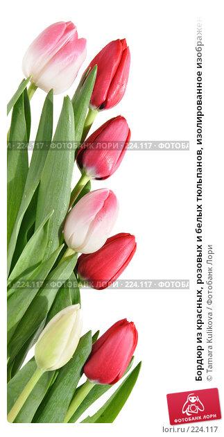 Бордюр из красных, розовых и белых тюльпанов, изолированное изображение, фото № 224117, снято 15 марта 2008 г. (c) Tamara Kulikova / Фотобанк Лори