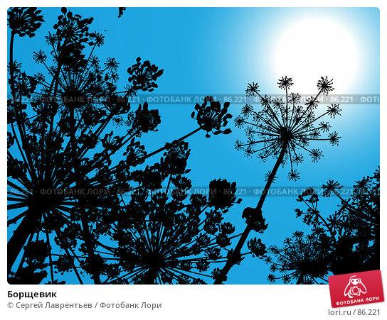 Купить «Борщевик», иллюстрация № 86221 (c) Сергей Лаврентьев / Фотобанк Лори