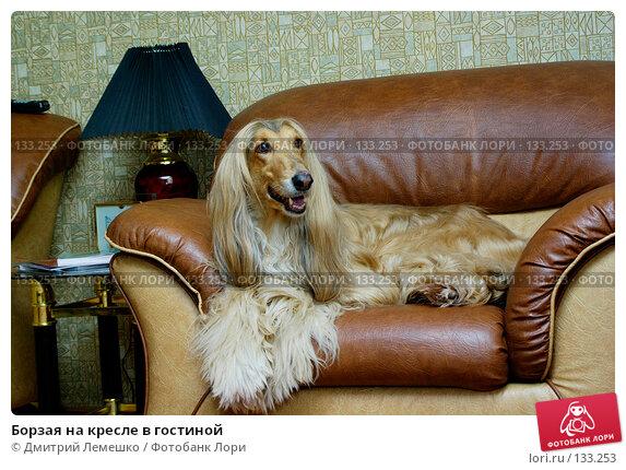 Борзая на кресле в гостиной, фото № 133253, снято 14 ноября 2007 г. (c) Дмитрий Лемешко / Фотобанк Лори