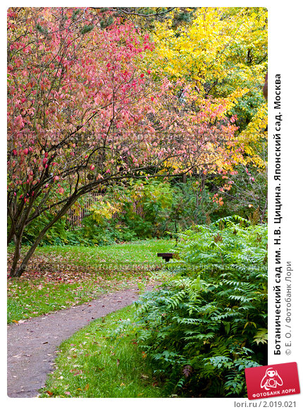 Ботанический сад им. Н.В. Цицина. Японский сад. Москва ...: http://lori.ru/2019021