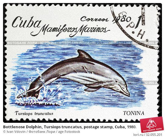 Bottlenose Dolphin, Tursiops truncatus, postage stamp, Cuba, 1980. (2014 год). Редакционное фото, фотограф Ivan Vdovin / age Fotostock / Фотобанк Лори