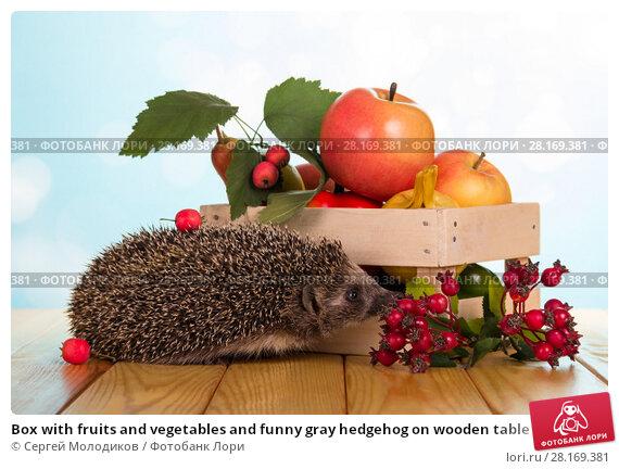Купить «Box with fruits and vegetables and funny gray hedgehog on wooden table», фото № 28169381, снято 3 сентября 2016 г. (c) Сергей Молодиков / Фотобанк Лори