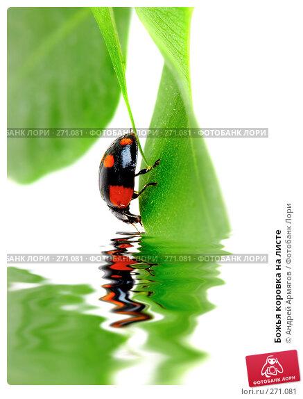 Божья коровка на листе, фото № 271081, снято 2 апреля 2007 г. (c) Андрей Армягов / Фотобанк Лори