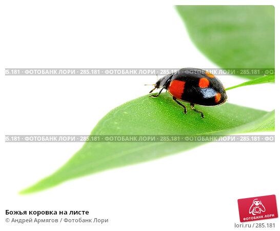 Божья коровка на листе, фото № 285181, снято 2 апреля 2007 г. (c) Андрей Армягов / Фотобанк Лори