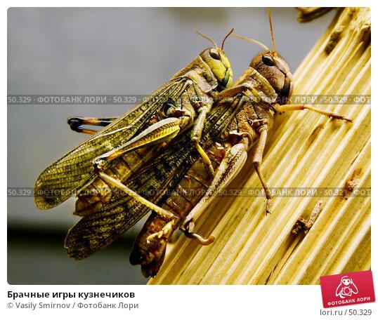 Брачные игры кузнечиков, фото № 50329, снято 19 мая 2002 г. (c) Vasily Smirnov / Фотобанк Лори