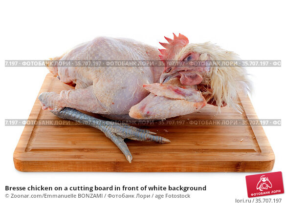 Bresse chicken on a cutting board in front of white background. Стоковое фото, фотограф Zoonar.com/Emmanuelle BONZAMI / age Fotostock / Фотобанк Лори