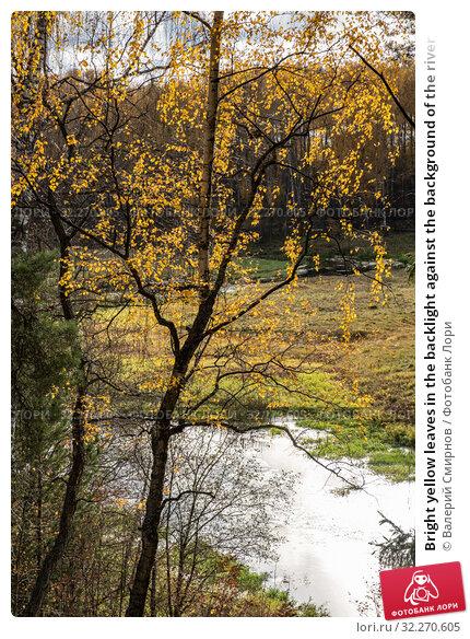 Купить «Bright yellow leaves in the backlight against the background of the river», фото № 32270605, снято 5 октября 2019 г. (c) Валерий Смирнов / Фотобанк Лори