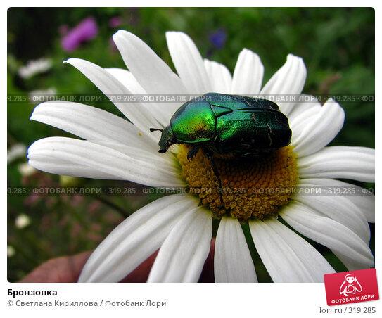 Бронзовка, фото № 319285, снято 10 июня 2008 г. (c) Светлана Кириллова / Фотобанк Лори