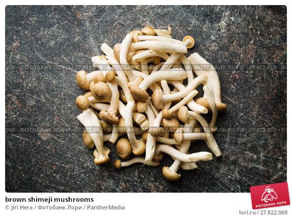 Купить «brown shimeji mushrooms», фото № 27822069, снято 20 октября 2018 г. (c) PantherMedia / Фотобанк Лори