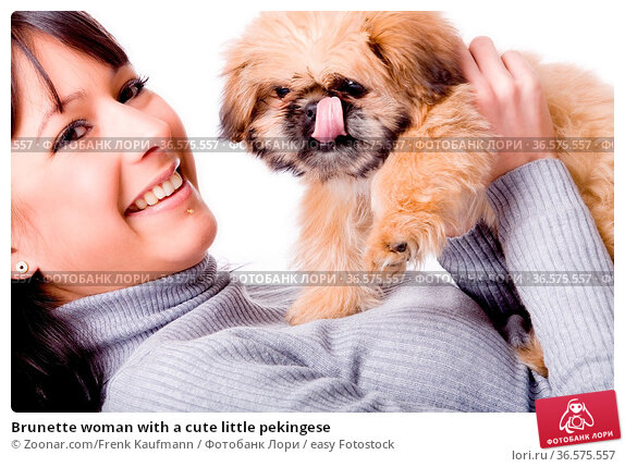 Brunette woman with a cute little pekingese. Стоковое фото, фотограф Zoonar.com/Frenk Kaufmann / easy Fotostock / Фотобанк Лори
