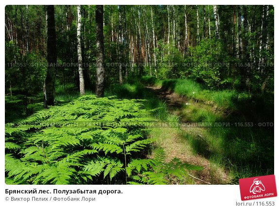 Брянский лес. Полузабытая дорога., фото № 116553, снято 9 июня 2007 г. (c) Виктор Пелих / Фотобанк Лори