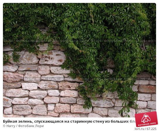 Буйная зелень, спускающаяся на старинную стену из больших блоков песчаника, фото № 67225, снято 30 июля 2004 г. (c) Harry / Фотобанк Лори