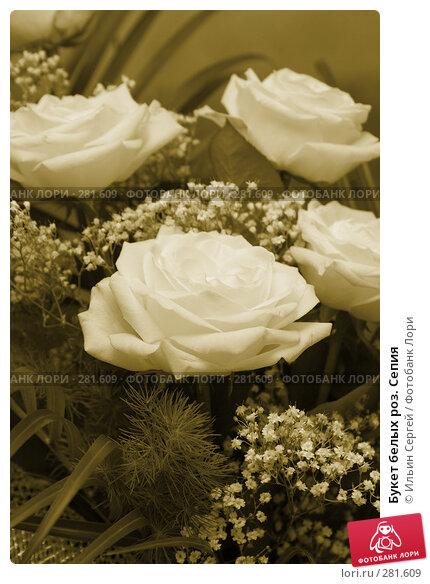 Букет белых роз. Сепия, фото № 281609, снято 10 августа 2007 г. (c) Ильин Сергей / Фотобанк Лори