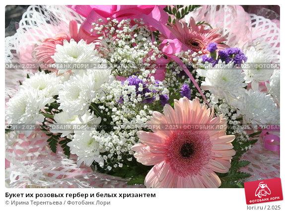 Букет их розовых гербер и белых хризантем, эксклюзивное фото № 2025, снято 16 июня 2005 г. (c) Ирина Терентьева / Фотобанк Лори