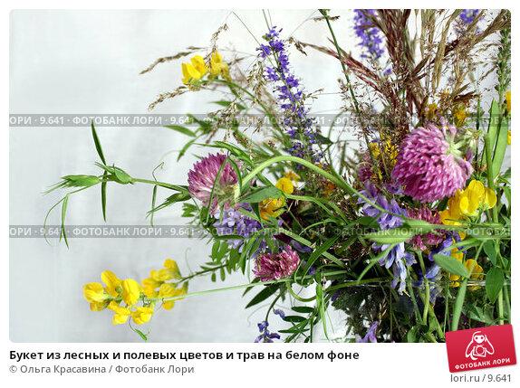 Букет из лесных и полевых цветов и трав на белом фоне, фото № 9641, снято 24 июля 2006 г. (c) Ольга Красавина / Фотобанк Лори