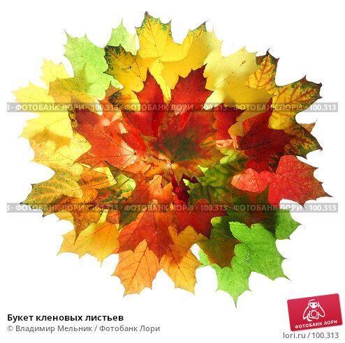 Букет кленовых листьев, фото № 100313, снято 4 октября 2007 г. (c) Владимир Мельник / Фотобанк Лори