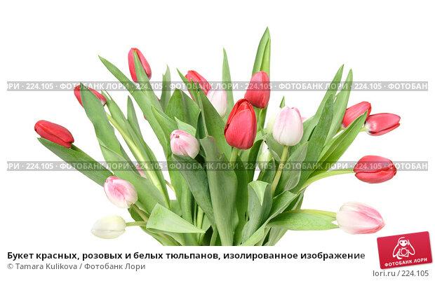 Букет красных, розовых и белых тюльпанов, изолированное изображение, фото № 224105, снято 15 марта 2008 г. (c) Tamara Kulikova / Фотобанк Лори