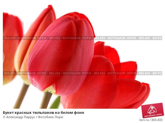 Букет красных тюльпанов на белом фоне, фото № 303433, снято 21 апреля 2008 г. (c) Александр Паррус / Фотобанк Лори