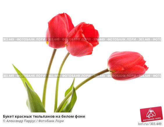 Купить «Букет красных тюльпанов на белом фоне», фото № 303449, снято 21 апреля 2008 г. (c) Александр Паррус / Фотобанк Лори